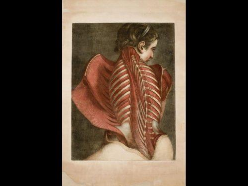 Anatomia in mostra al Palazzo delle Esposizioni in Roma